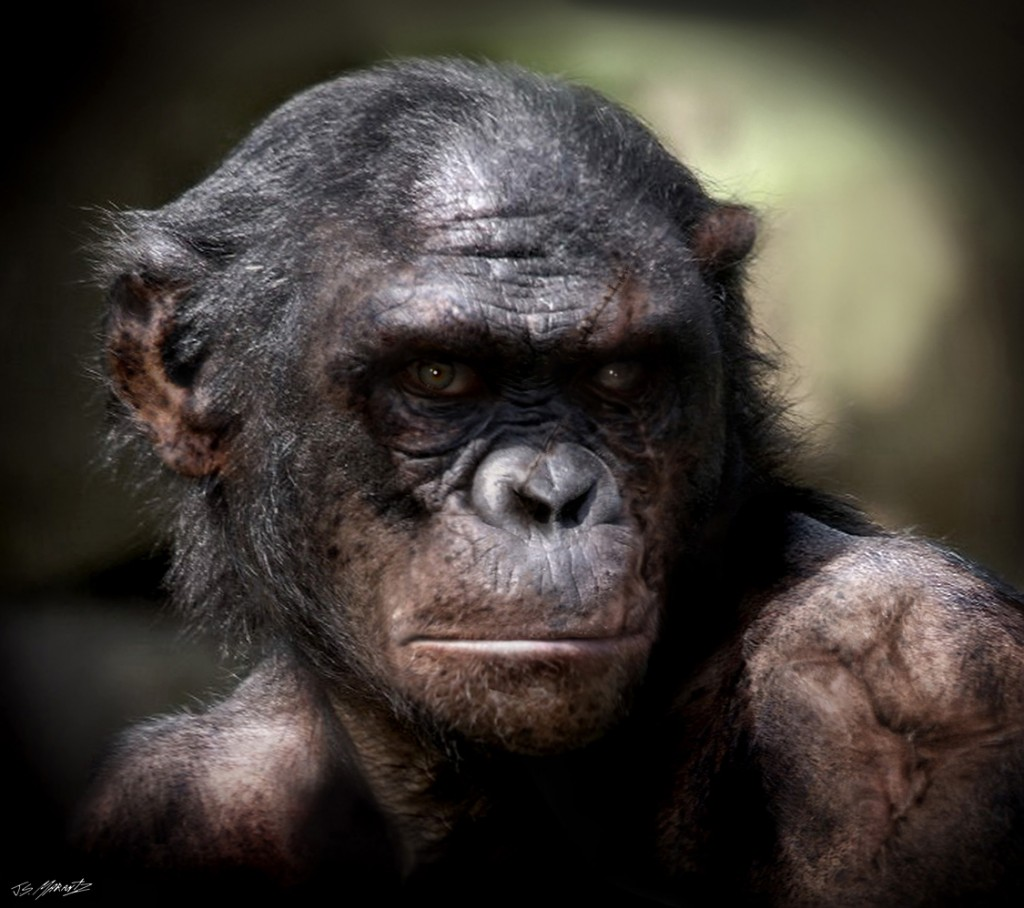 Concept art of Koba from Rise of the Planet of the Apes.