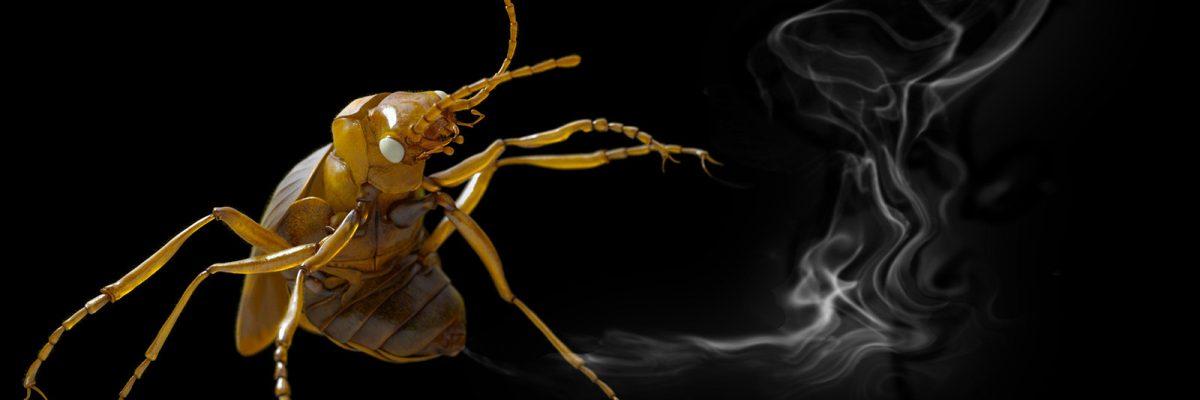 Anatomy Lab: Entomology for Creature Designers