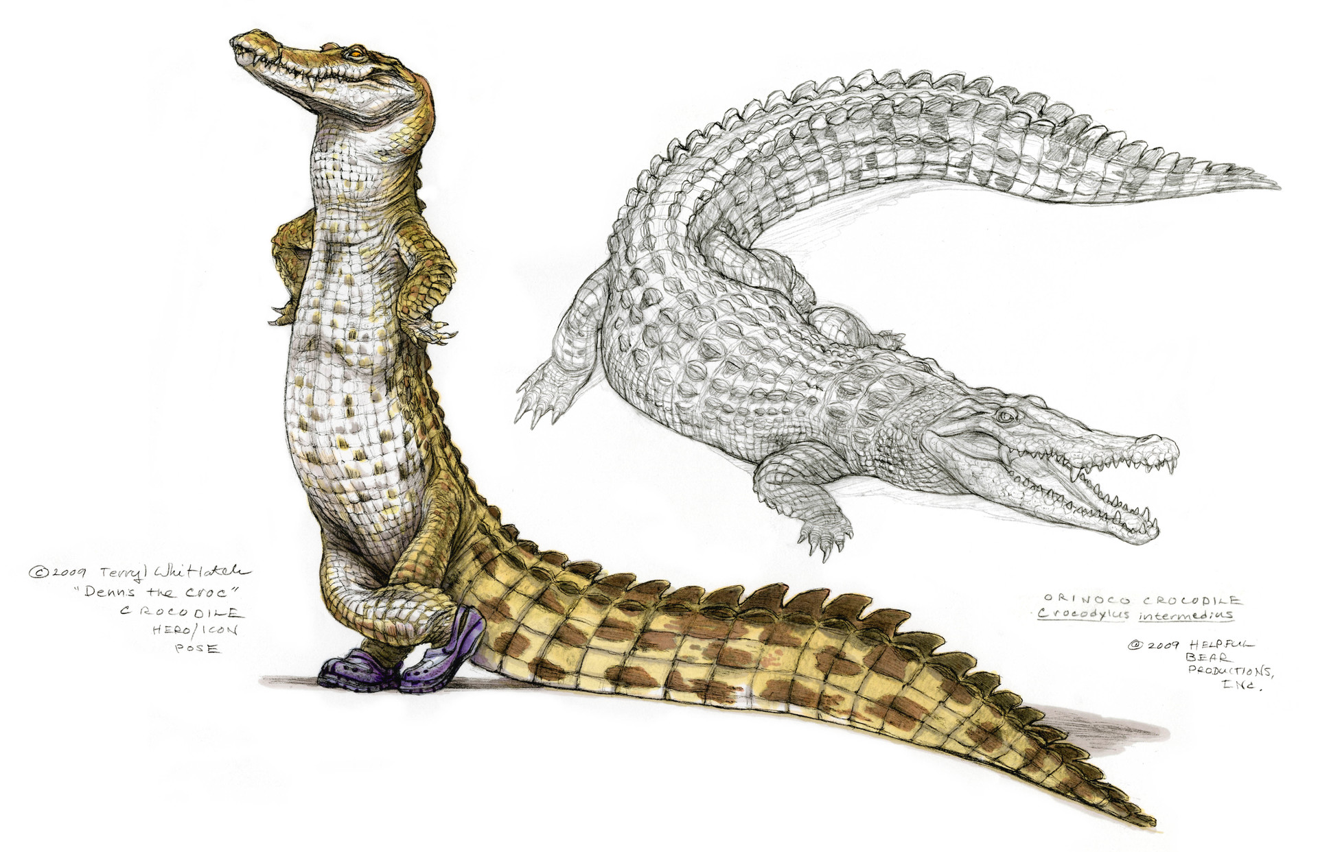 A croc wearing Crocs. Visual humor is a recurring feature of Terryl's work.