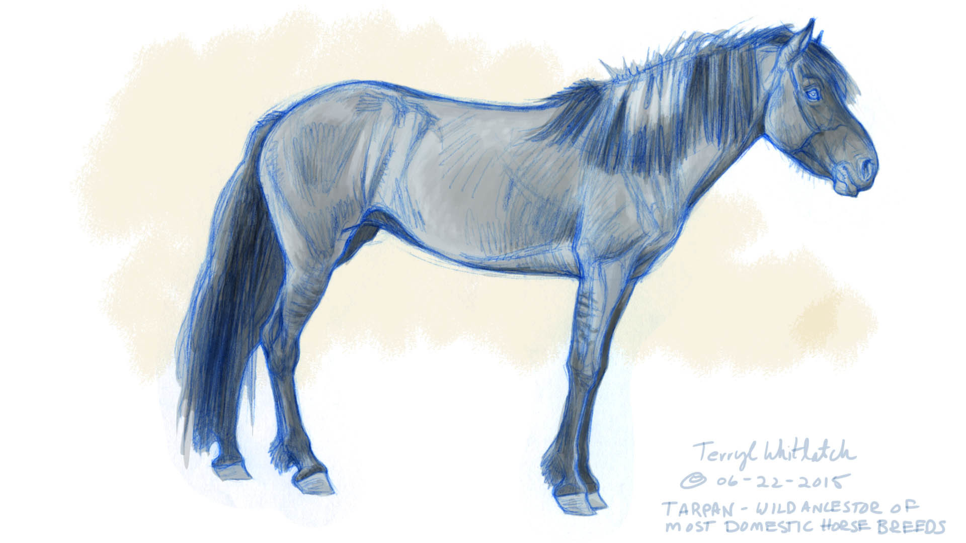Learn to draw horses, advises Terryl: they appear more often than any other animal in fine art and animation.