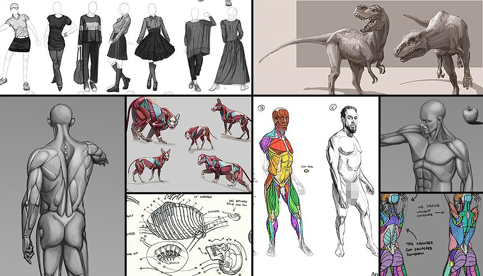 anatomy-student-galleries-collage2