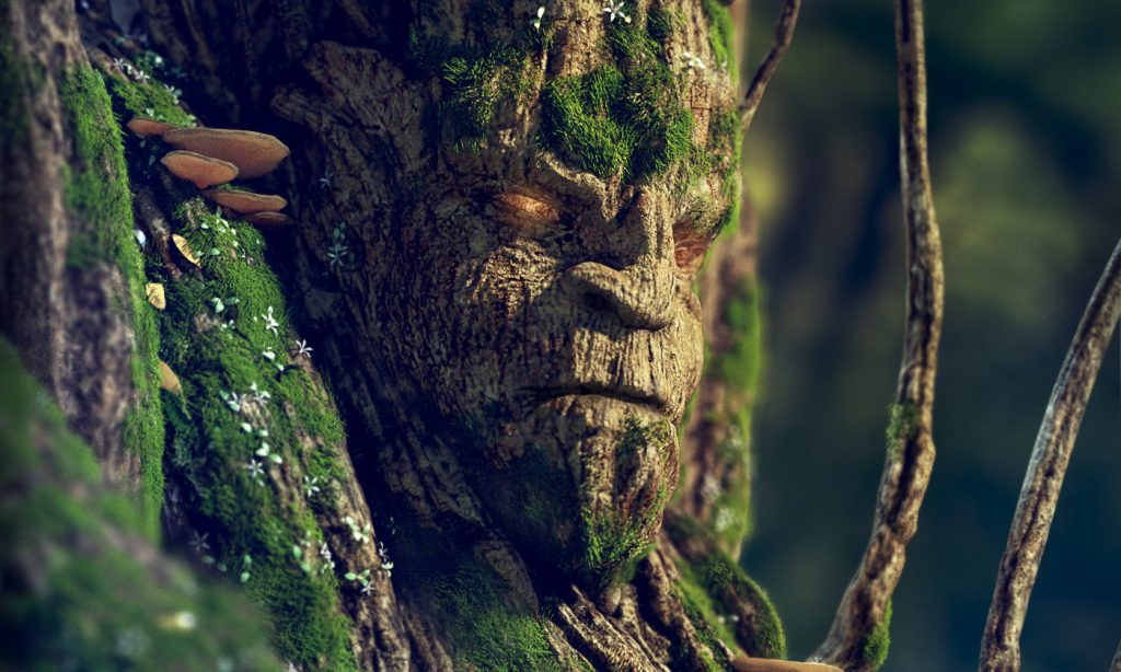 An angry looking face in a mossy tree