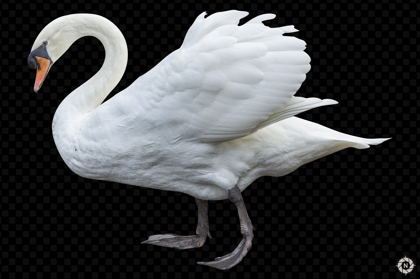 A picture of a swan